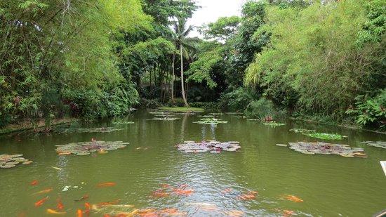 Rochers Caraibes-Eco Village : Botanical garden