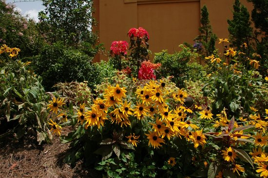 Beautiful Flowers Picture Of New Orleans Botanical Gardens New Orleans Tripadvisor
