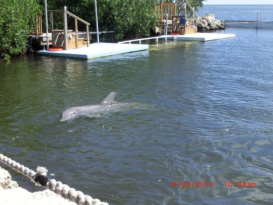 Dolphin Research Center : One of the dolphins there.