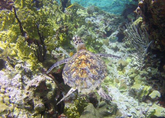 Aqua Marine Dive Center: Aqua Marine Dive