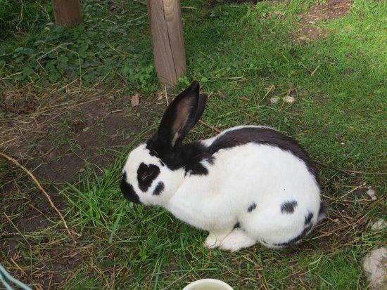 Mayringerlehen: The rabbit!