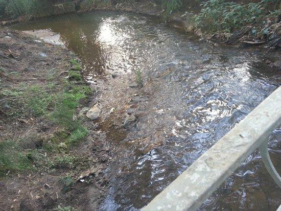 Victoria Park of Nuwara Eliya: Victoria's park, bridge & small river