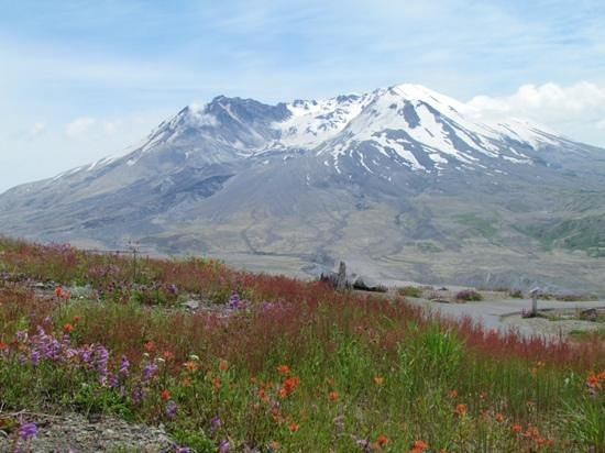 Johnston Ridge Observatory: Mt. St. Helens and wildflowers