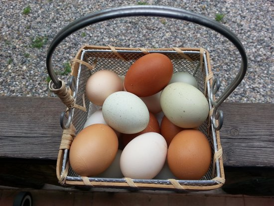 Rancho Jacona: Fresh eggs!! YUM