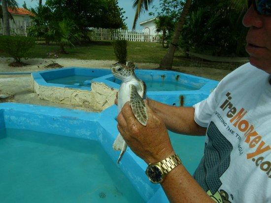 Sea Turtle Hatchery: Tortuguita de 4 meses de edad