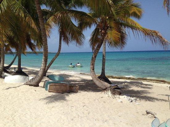 Isla Catalina : Beautiful!