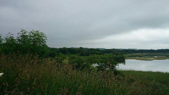 Brockholes Nature Reserve: View