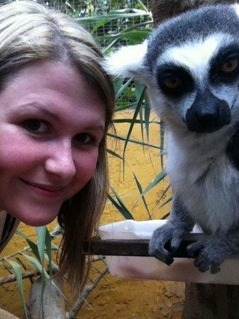 Monkey Park : Lemur selfie