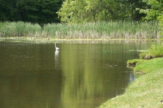Wild Duck Campground & RV Park, Inc: entrée du camping