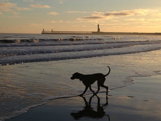 Whitby Beach: The pier and my dog