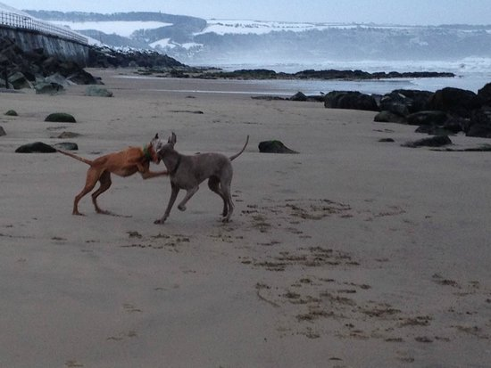 My dogs on Whitby beach