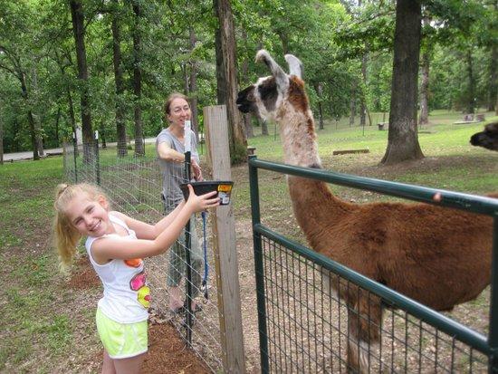 Lake Lucerne Resort: feeding the llamas