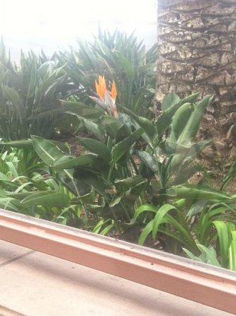 Hilton Garden Inn Carlsbad Beach: Bird of Paradise