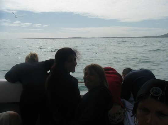 Shark Cage Diving South Africa: take motion sickness precautions...don't miss the action for puking