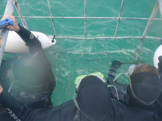 Shark Cage Diving South Africa: in the cage