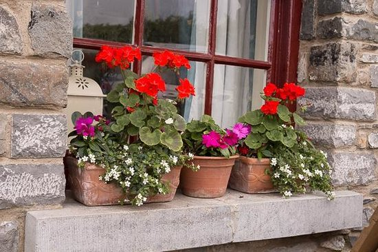 Skerries Mills : Windowbox at Skerries Mill