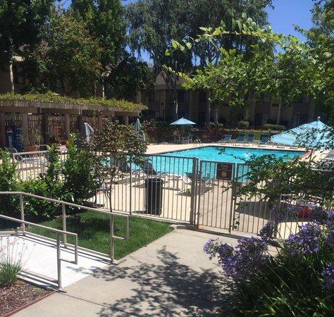 Sheraton Sunnyvale: Olympic Size Pool