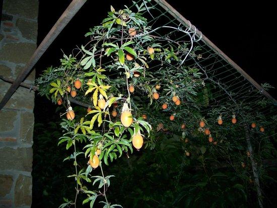 La Carreccia: soir sur une des 2 terrasses privées