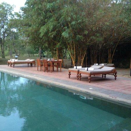 Jetwing Vil Uyana : Pool Area