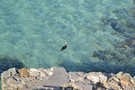 Hotel Roca Bella: Vista alle 8 dalla ns terrazza : cormorano a pesca