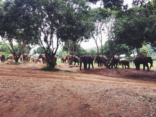 Baanchang Elephant Park - Private Day Tours: Happy elephants