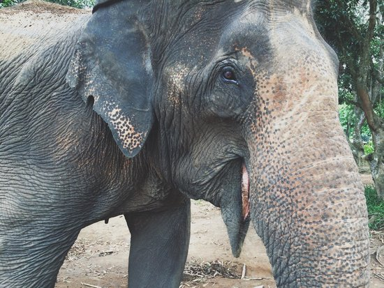 Baanchang Elephant Park - Private Day Tours: Experience feeding, training, and bathing these beautiful animals.