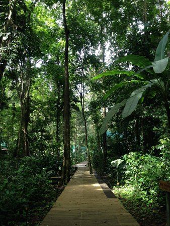 Almonds and Corals Hotel: Rainforest