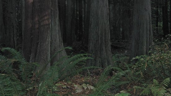 Fort Townsend State Park: Wonderful old woodland paths