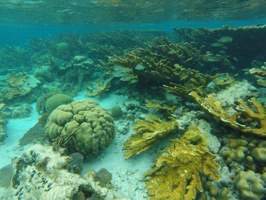 Grumpy & Happy : Beautiful undersea gardens