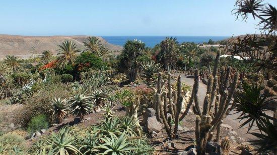 Oasis Park Fuerteventura: Veduta dal giardino dei cactus