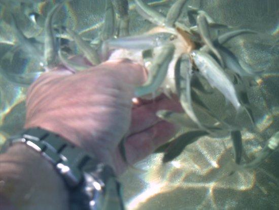 Louis Zante Beach Hotel : The fish are friendly too