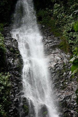 San Jorge de Tandayapa Hummingbird Sanctuary & Lodge : El Puhoma Orchid Reserve