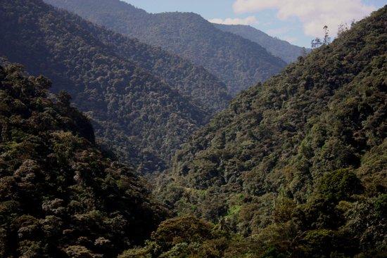 San Jorge de Tandayapa Hummingbird Sanctuary & Lodge : Tandayapa Cloud Forest