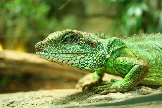 Kölner Zoo: Koelner Zoo