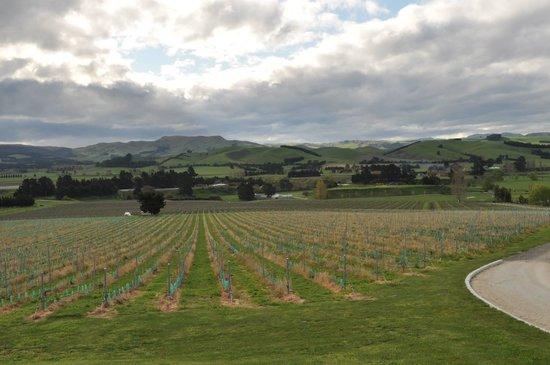 Black Estate Wine: Beautiful view of the vineyard