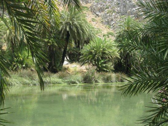 Plakias Suites: palm forest - preveli