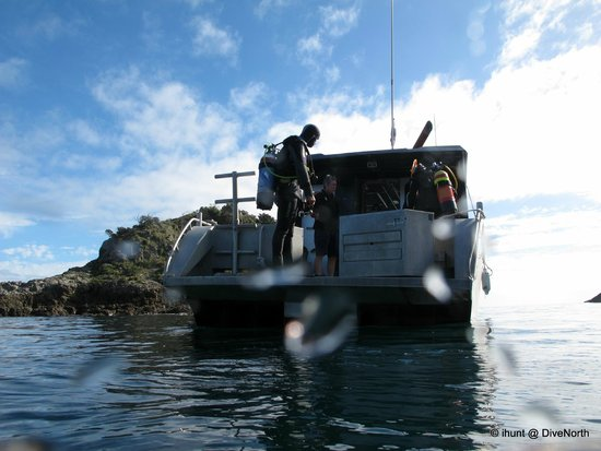 Dive North: A great days diving in the Bay of Islands