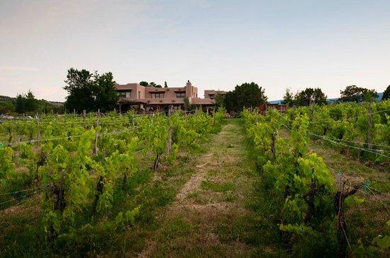 Leroux Creek Inn : vineyard and inn