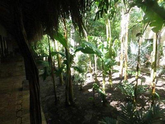 Hotel Posada del Hidalgo: Outside our room, a veritable jungle.