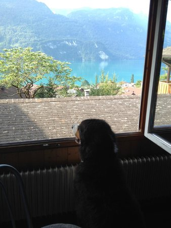 Hotel Lindenhof: Pup enjoying his view from our room, #23