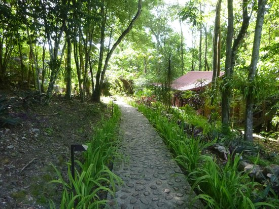 Table Rock Jungle Lodge: path to dining room