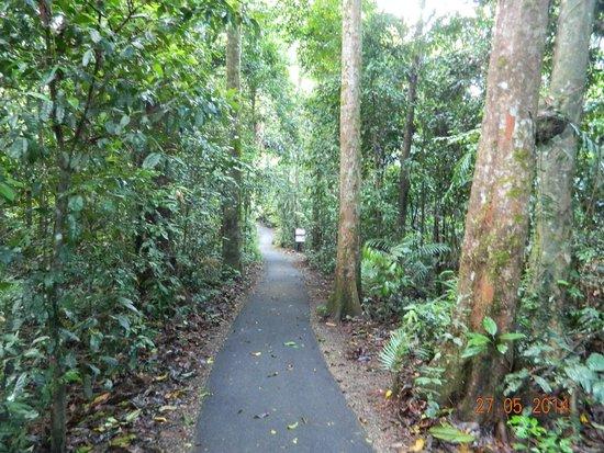 Josephine Falls: paths