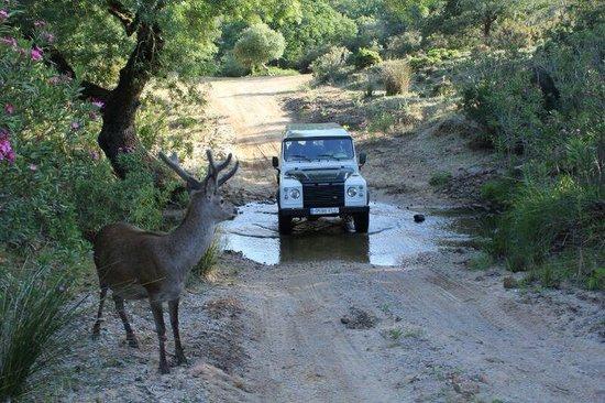 Castellar de la Frontera, สเปน: Visita Parque Natural de los Alcornocales 4x4