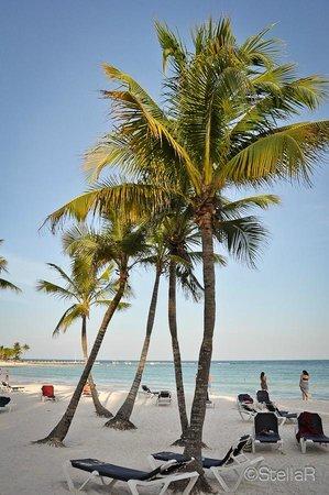 Hotel Barcelo Maya Beach: ...