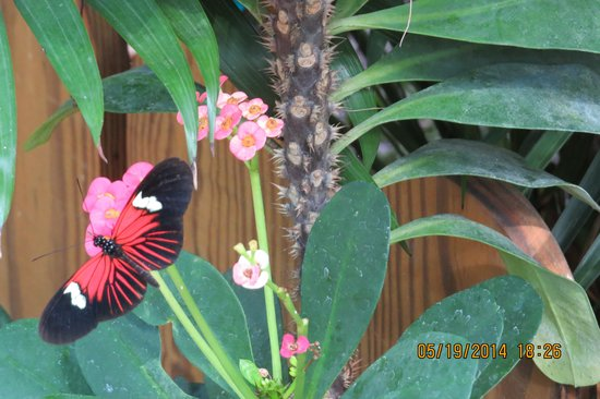 The Paradise Inn : Butterfly Conservatory