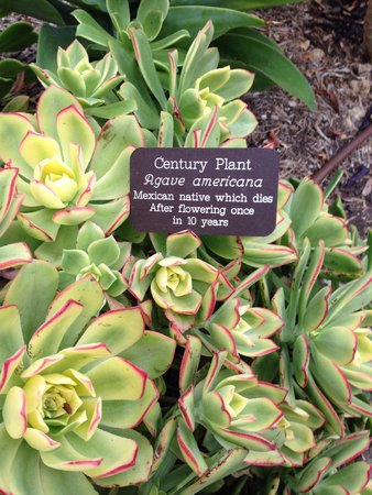 Estancia La Jolla Hotel & Spa: Colorful cactus flowers