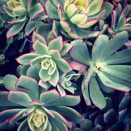Estancia La Jolla Hotel & Spa : Garden