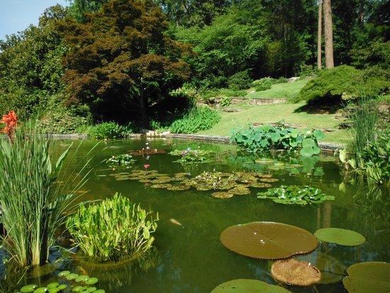 Sarah P. Duke Gardens: turtles