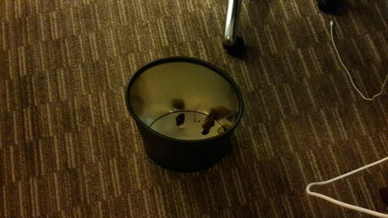 The Westin Minneapolis: dirty trash can