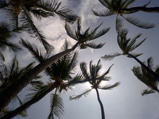 Anaehoomalu: Nice shade